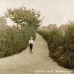Lippiatt Lane