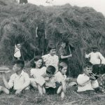 Haymaking in the 1930s in the field that is now the Greenvale estate.