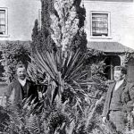 Yucca plant at Rossiter's Nursery, Radford in 1909. Rossiters started their nursery around 1907 and closed in the 1940s